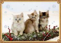 Cover von A3-Wandkalender - Katzentrio im Schnee